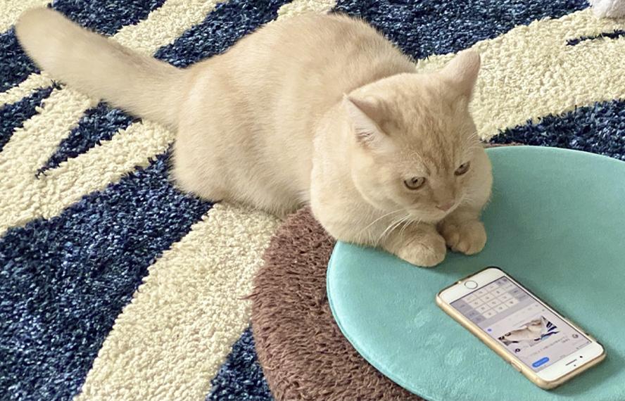 猫がスマホを見ているイメージ画像
